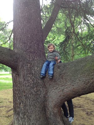 Day 162 of The 366 Project, climbng trees