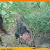 लावारिस लाश मिलने से सनसनी, हत्या कर फेंकने की आशंका