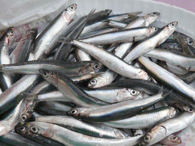 ραντεβού δωρεάν ψαριών βγαίνω με έναν χαμένο