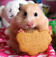 Funny Hamster Photo Biscuit