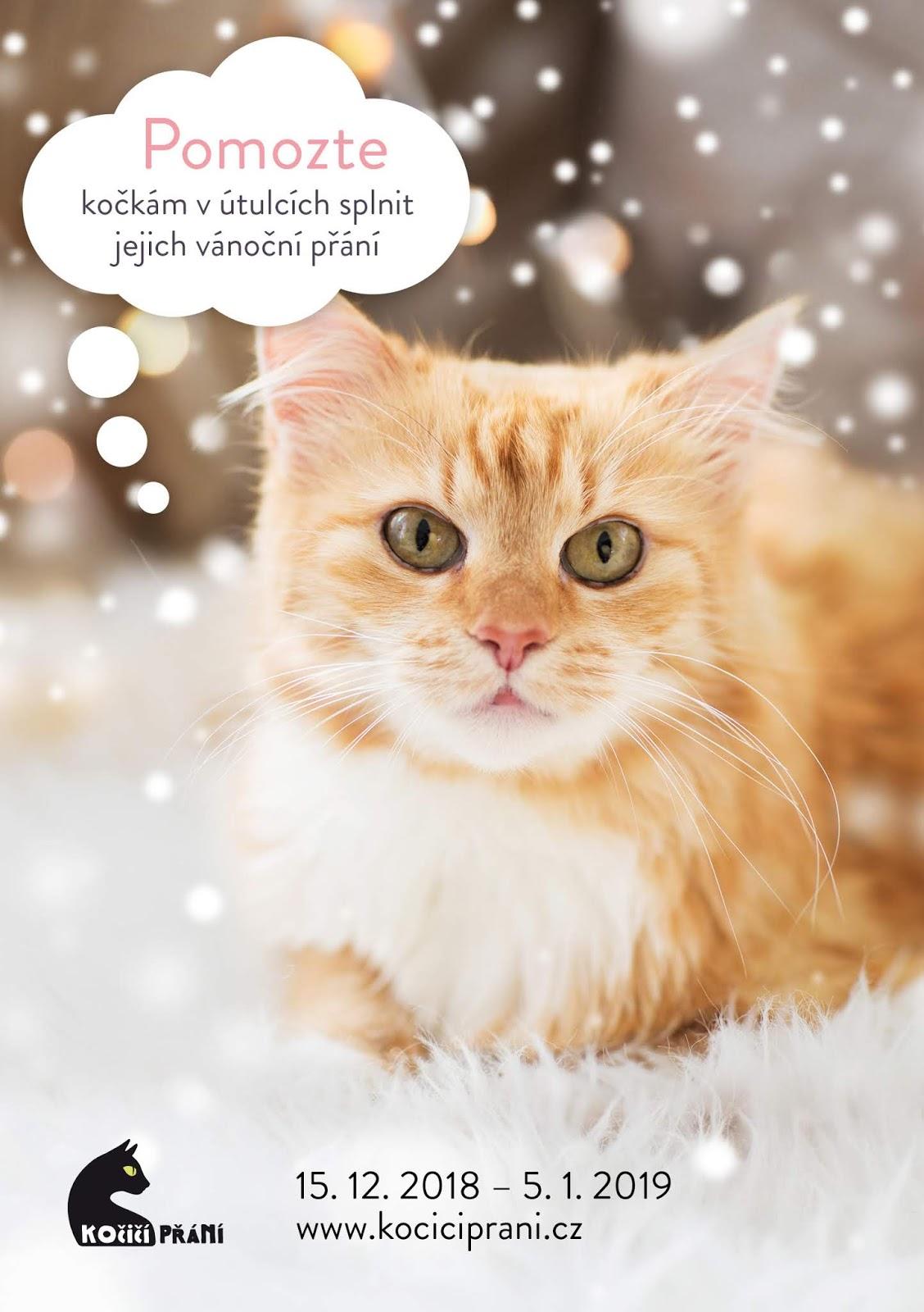 Perská kočka je jedním z nejkontroverznějších plemen, protože je prostě buď milujete, nebo nesnášíte.