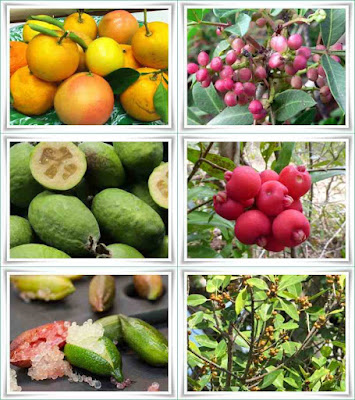 Fruit Names That Start With F