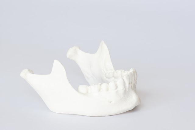 model żuchwy