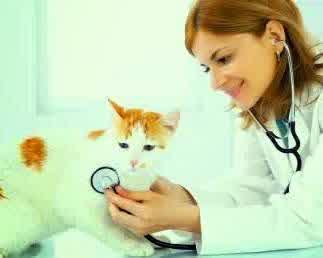 BAHAYA BAGI KUCING : Virus Feline Panleukopenia (FPL) - PLANET PERSIAN