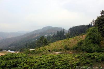 Beautiful Places in Gwaldam tea garden