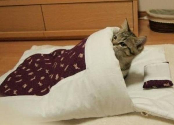 смешной котенок в кроватке