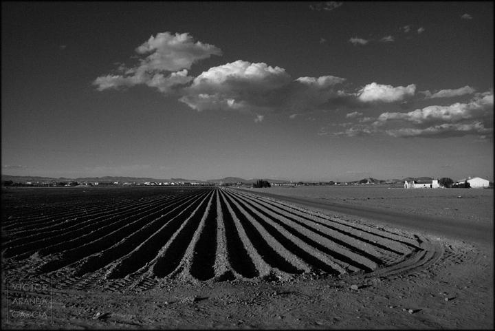 fotografia, fuente_alamo, cultivos, paisaje, arte, murcia, campo