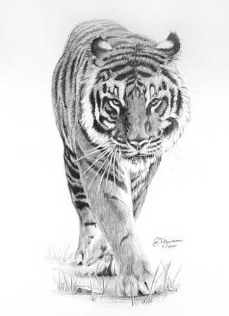 15 Most Amazing Tiger Tattoos