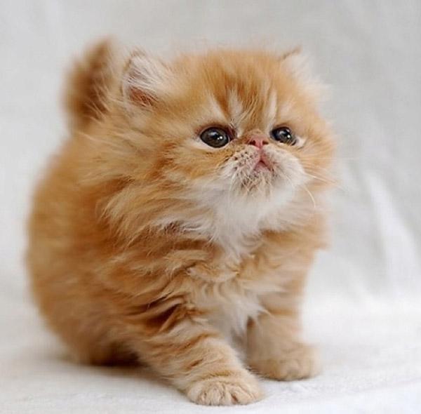 cat lover blog cat