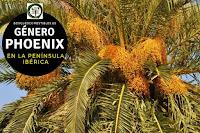 El género Phoenix son arboles de porte esbelto y elegante, que pueden llegar a medir hasta 30 m. de altura