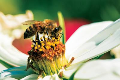 Πως μπορούμε να βοηθήσουμε τις μέλισσες