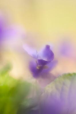 Green Pear Diaries, fotografía, fotografía macro, naturaleza, Andrea Gulickx