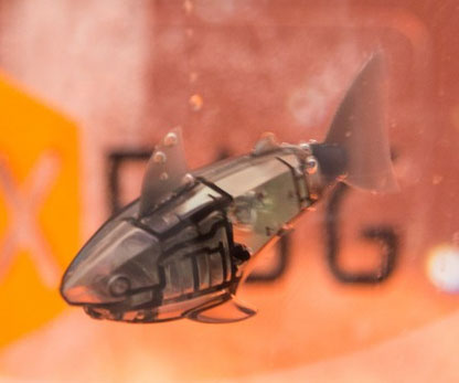 While other pets wither and die, the robotic fish is the one pet you can count on to to stand the test of time – even if you forget to feed it. As long as there's juice in his batteries, this little guy will happily swim all day and night for your personal enjoyment.