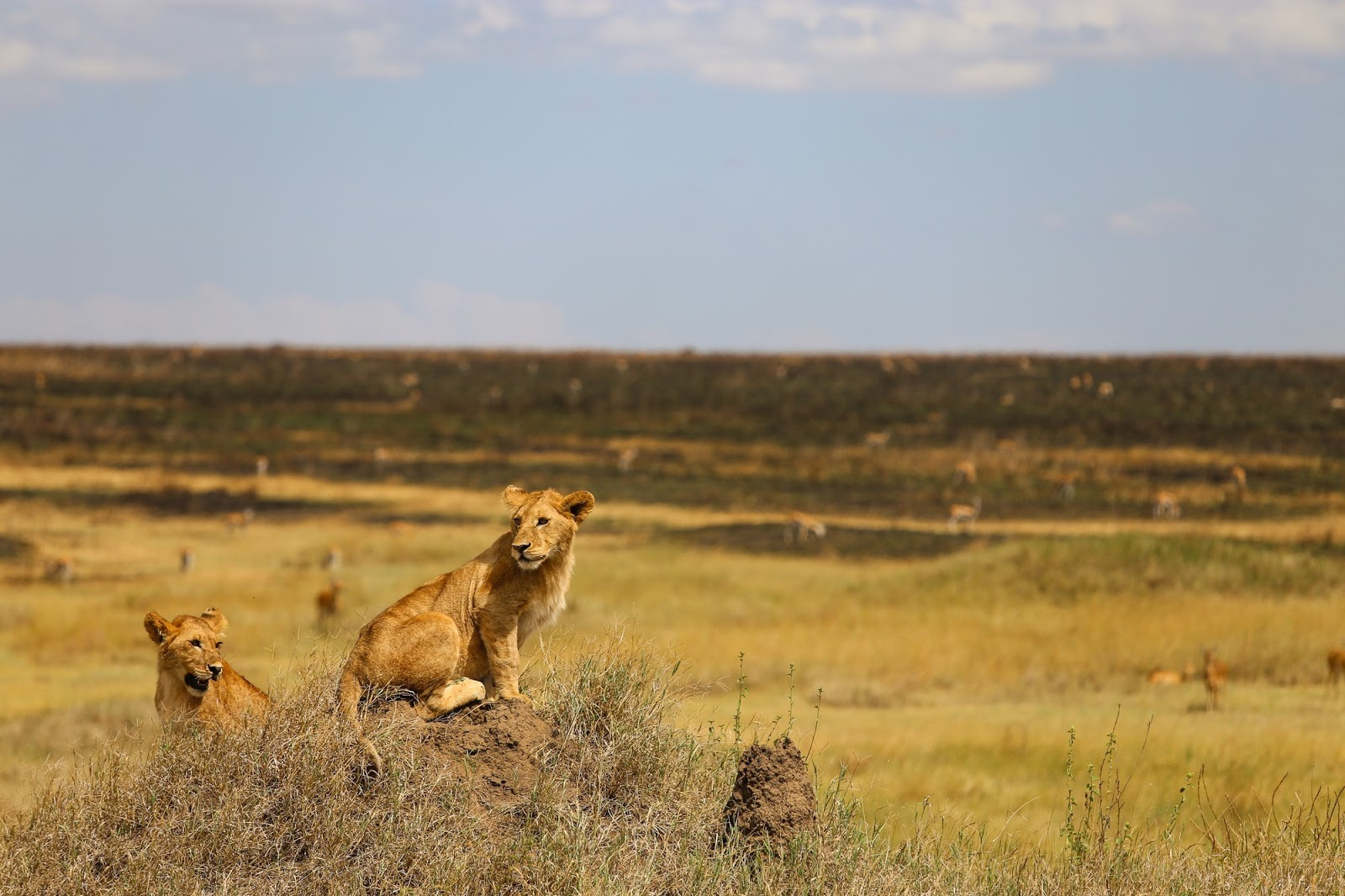10 Places To Visit In Africa For A Thrilling Vacation 6