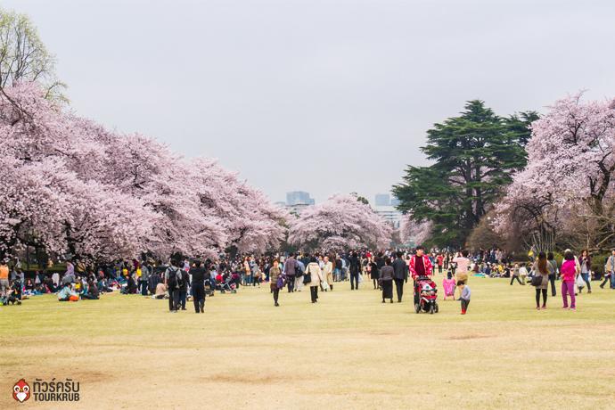 1. ทัวร์โตเกียว ชมซากุระที่สวนชินจูกุเงียวเอน