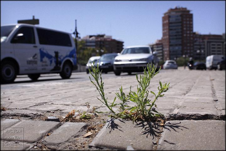 fotografía, naturaleza urbana, Valencia, coches, tráfico