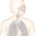Mesothelioma vs. Lung Cancer Diagnosis: What's the Difference?