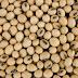 Tecnologias em sementes e condições climáticas indicam soja ideal para plantio
