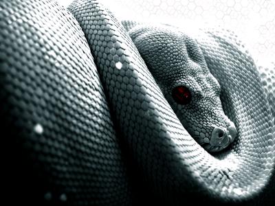 Mơ thấy ở nhà ẩm thấp & có nhiều rắn