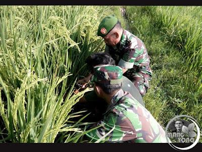 Terimakasih Keberadaan TNI di tengah masyarakat Petani