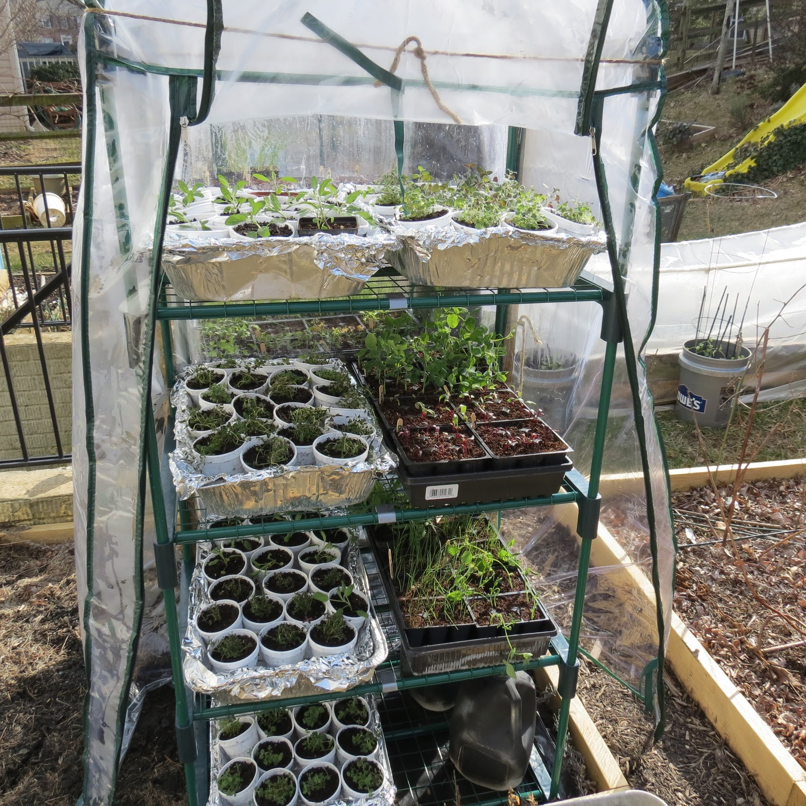 Growing Plants In A Shelf Greenhouse The Rusted Vegetable Garden Blog