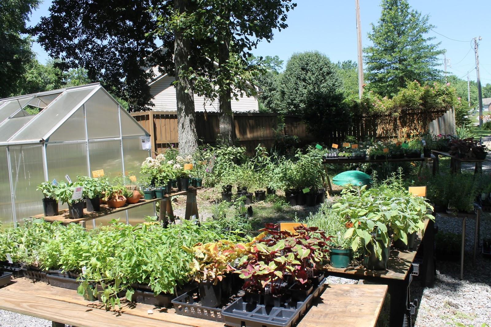 Mimi39s Greenhouse
