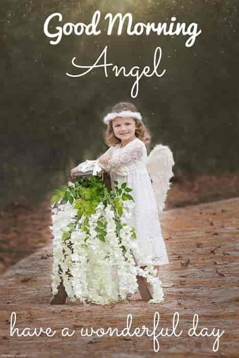 good morning angel pics