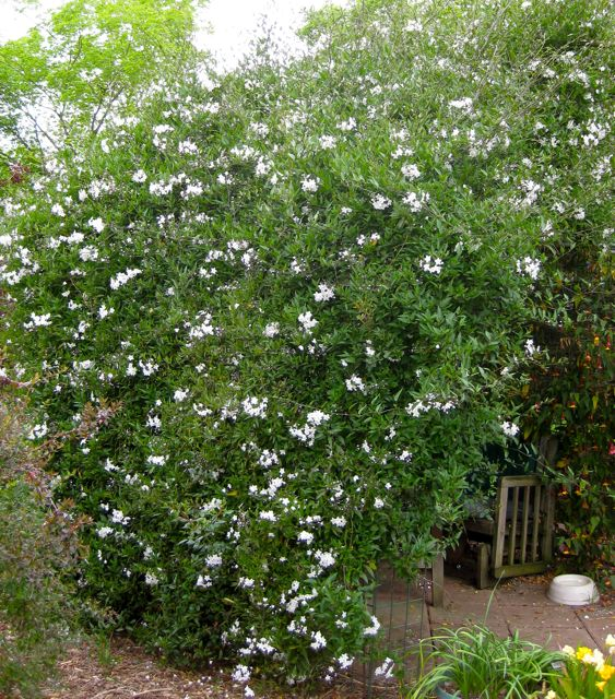 The Farmer Fred® Rant: Plants For Privacy