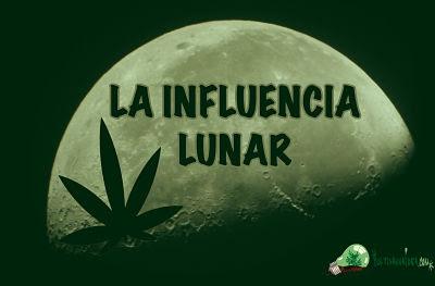 influencia lunar en cultivo de marihuana