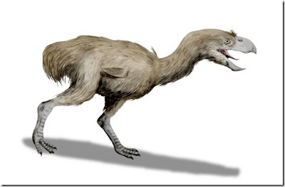 Physornis