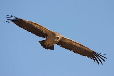 Observatorio de aves Sierra de Guara