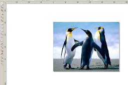 Cara Membuat Gambar Transparant di Corel Draw