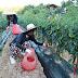 해냄청소년활동센터, '하농하농' 농촌봉사활동