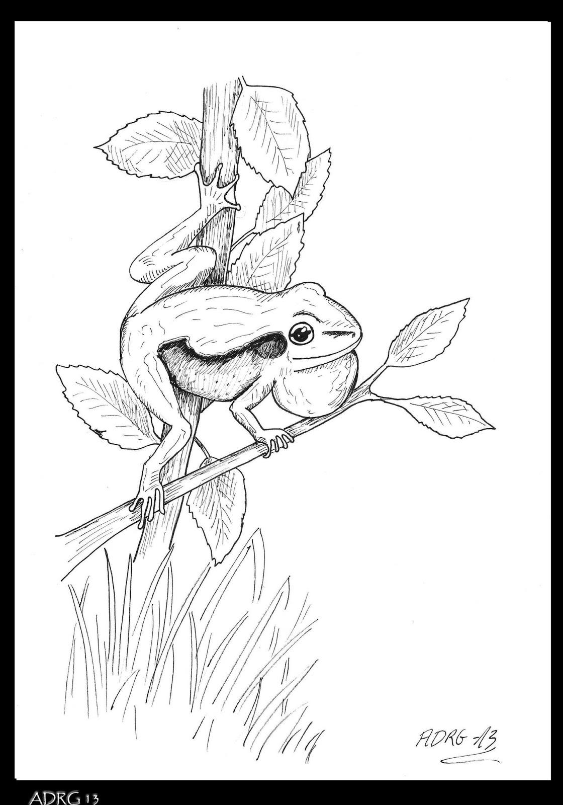para naturaleza dibujar