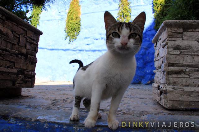 Gato en las calles de Chaouen