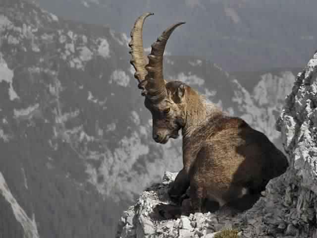 أجمل الصور للحيوانات في الطبيعة