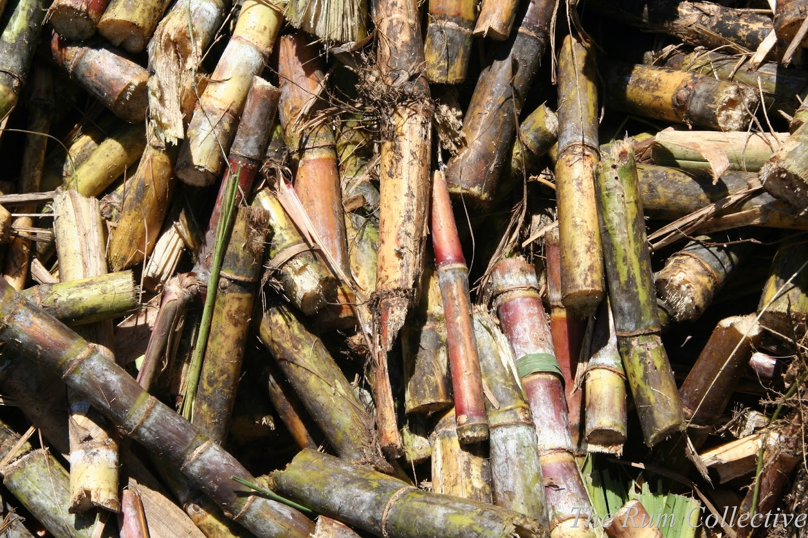 Stalks Of Fresh Sugar Cane For Extracting The Juice Stock ... |Sugar Cane Stalks