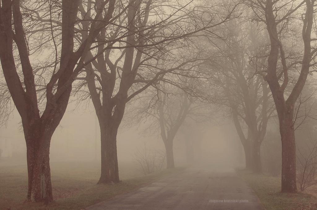 Mgła na warmińskich drogach