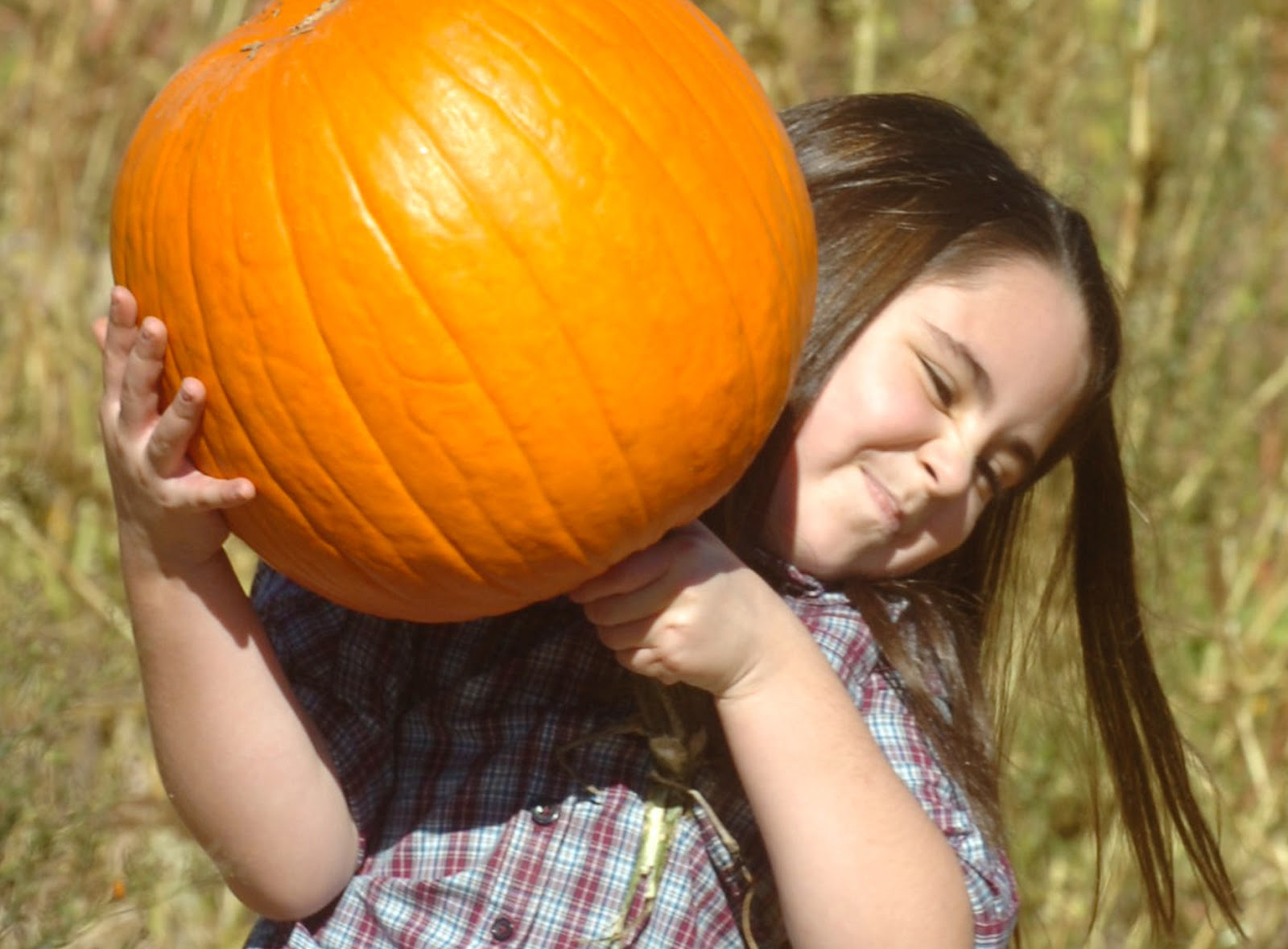 Autumn Nature Activities For Children Autumn Posters Picture