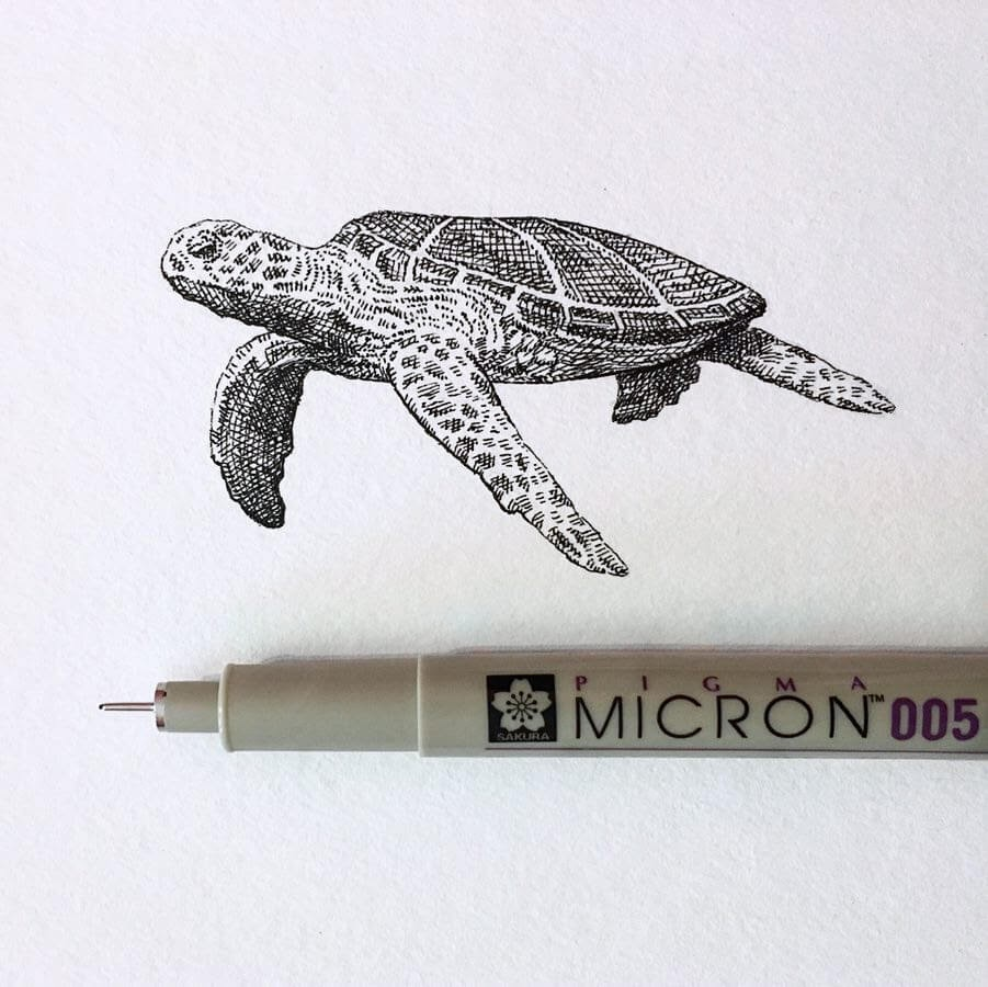 11-Sea-Turtle-Bryan-Schiavone-Tiny-Animals-in-Pen-and-Ink-Drawings-www-designstack-co