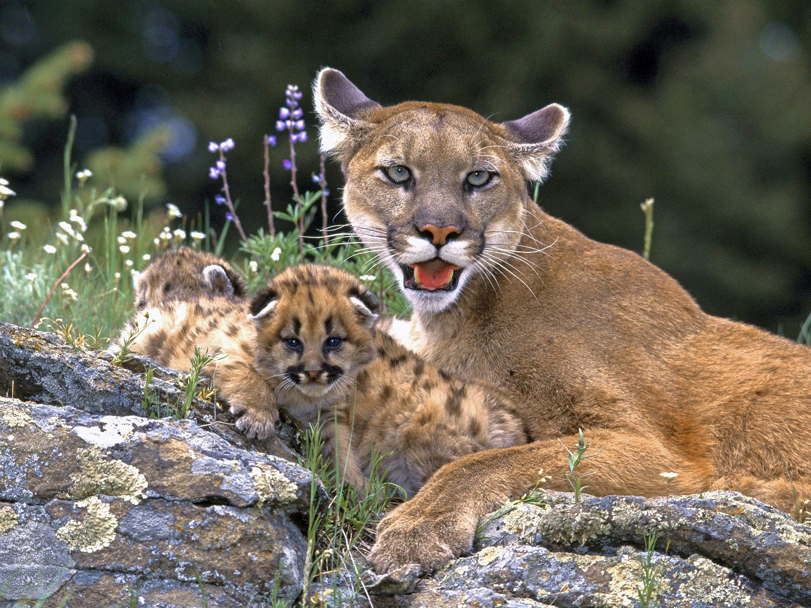 Salvar animales en extinción