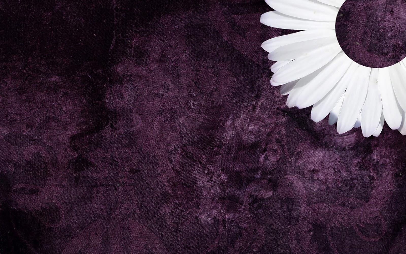 4 Free Purple Daisy Tumblr Backgrounds | ibjennyjenny ...