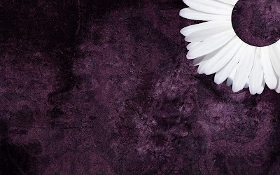 Purple Daisy Tumblr Backgrounds (2).jpg