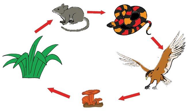 Ekosistem adalah hubungan timbal balik antara makhluk hidup dengan komponen abiotiknya dal Menjelaskan Rantai Makanan Pada Ekosistem