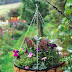 #Gardening : How To Plant a Winter Hanging Basket