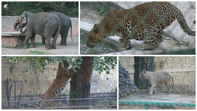 Aurangabad Zoo, - Elephants, Leopard, Tiger, White Tiger