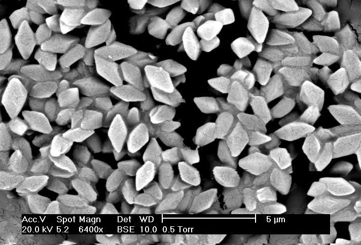 Bacillus Thuringiensis | Bactéria Gram-Positiva
