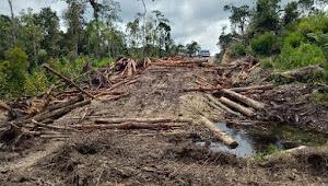 Penebangan Dilakukan Masif, Hutan Tele Terancam Punah