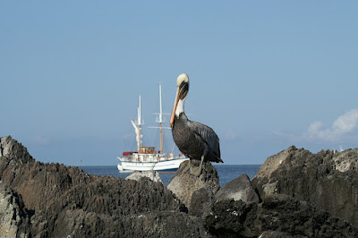 A Dream Vacation to Galapagos Islands
