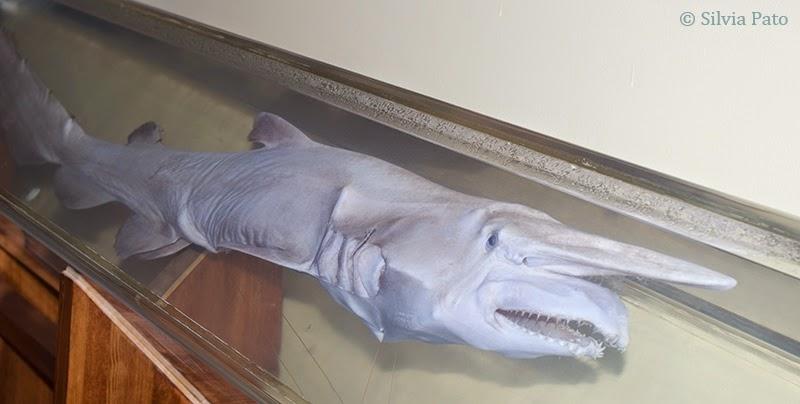 Sala de biología marina tiburones